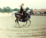 Arabian Tack on the Horse 3 by Roda Ferraro