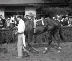 Graustark at Keeneland, April 1966 [1] by Roda Ferraro