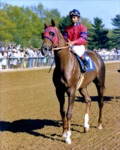 Alydar with Jorge Velasquez up by Roda Ferraro