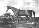 Darley Arabian 2 by Roda Ferraro