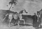 Imported Arab Horse by Roda Ferraro