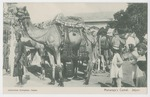 Maharaja's Camel, Jaipur by Antoinette Paris Greider and Mary Pattengill